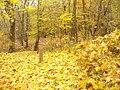 Kladow - Herbstgold (Autumn Gold) - geo.hlipp.de - 30474.jpg