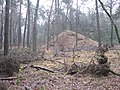 Kogelvanger Vossen (31017505841).jpg