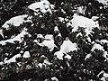 Kolomenskoye in winter 10.jpg
