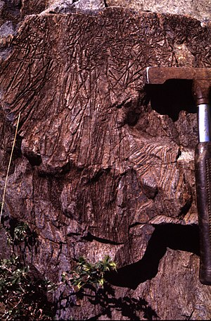 "Komatiite - Komatiite lava from the type locality in the Komati Valley, Barberton Mountainland, South Africa, showing the distinctive ""spinifex texture"" formed by dendritic plates of olivine (scale shown by a hammer on the right edge of photo)"