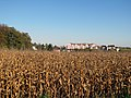 Koruzno polje, Podutik - panoramio.jpg