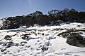 Kosciuszko National Park NSW 2627, Australia - panoramio (212).jpg