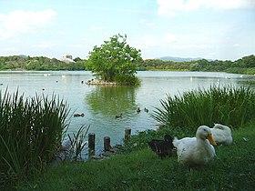 列島 昆陽 池 日本 スーパーGPSペアリング失敗⁉昆陽池へ(2話)