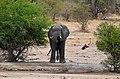 Kruger Park, South Africa - panoramio (2).jpg