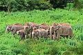 Kui Buri National Park (Prachuap Khiri Khan Province, Thailand.jpg