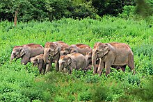 A herd of elephants in a forest