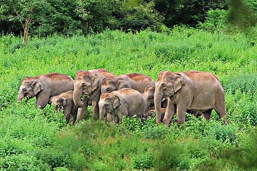 Kui Buri National Park (Prachuap Khiri Khan Province, Thailand