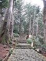 Kumano Kodo pilgrimage route Daimon-zaka World heritage 熊野古道 大門坂49.JPG