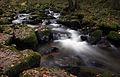 LSG Bayerischer Wald Otterbach3 Christine Landes.jpg