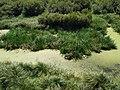 Lagoa da Apúlia 9.jpg