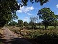 Lane at Crow - geograph.org.uk - 1542835.jpg