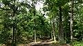 Lasy kostkowskie , On a hiking trail through Kostkowo woods - panoramio (3).jpg