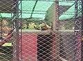 León durmiendo - panoramio.jpg