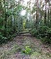 Leśna ścieżka - panoramio (1).jpg