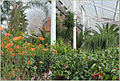 "Le jardin dhiver du ""Peoples Palace"" (Glasgow) (3835077322).jpg"