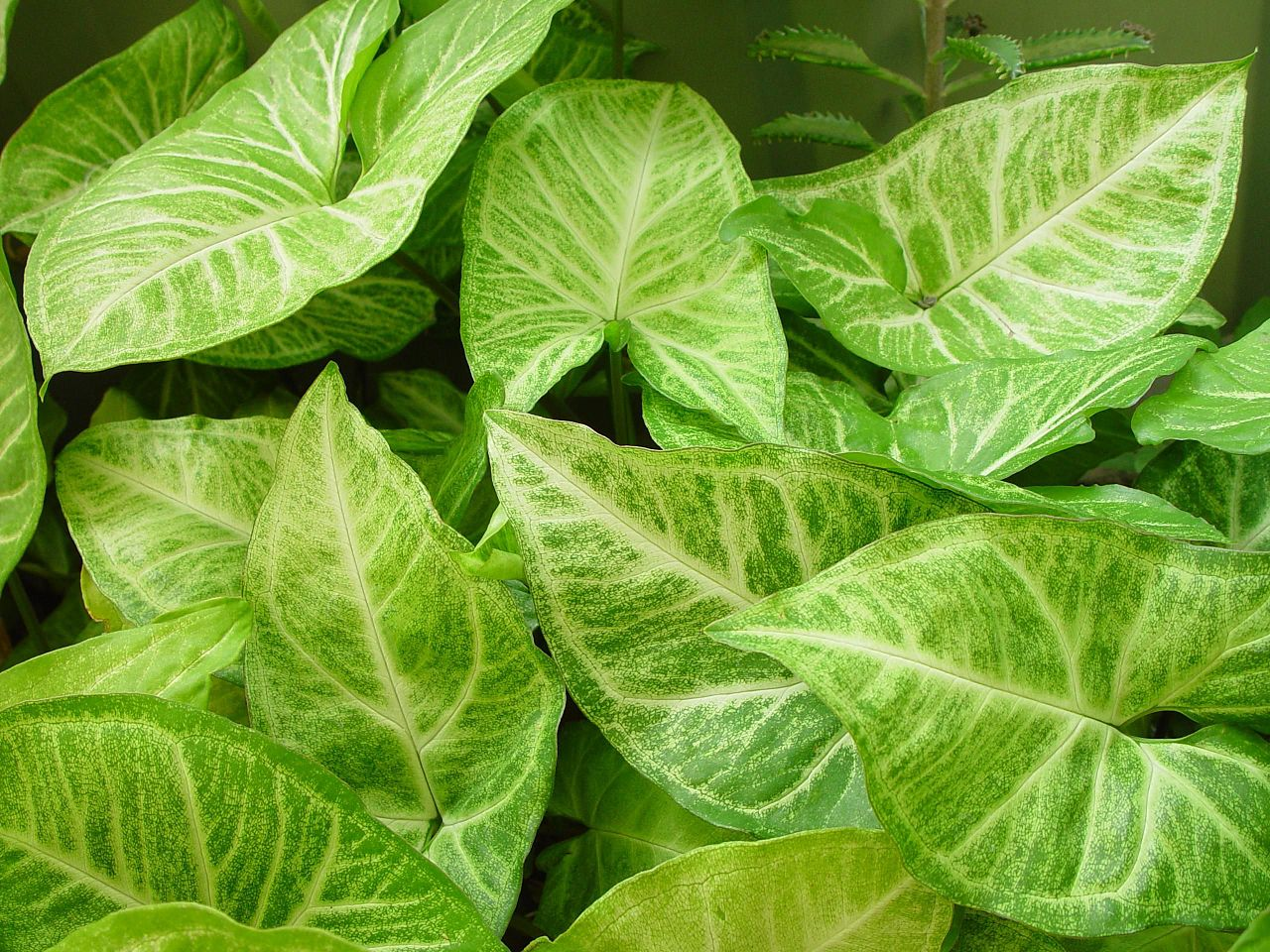 Original file ‎ (2,560 × 1,920 pixels, file size: 835 KB, MIME type ...: commons.wikimedia.org/wiki/File:Leafy_background.jpg