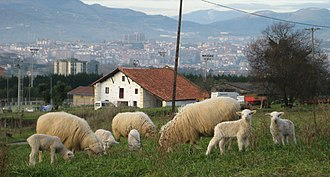 Greater Bilbao - Sheep, field and farmhouse in Leioa, and buildings of Santurtzi on the background.