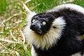Lemur (27618597178).jpg
