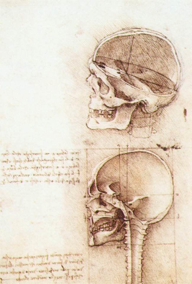 Leonardo da vinci, Studies of human skull