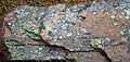 Lichen Covered Rock 2 (8034057772).jpg