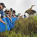 Light-Footed Clapper Rail release.jpg