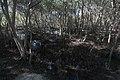 Light Fragments On The Mangroves Las Piñas-Parañaque Critical Habitat and Ecotourism Area (LPPCHEA).jpg