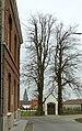 Linden bij de Terweeënkapel te Zwalm - 372249 - onroerenderfgoed.jpg