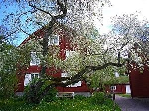 Linnaeus' Hammarby - In the spring