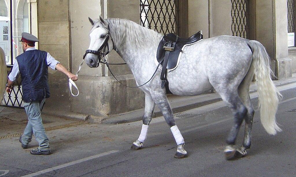 Autohotne pasmine konja u Hr i okruženju 1024px-Lipizzaner_DSC02443