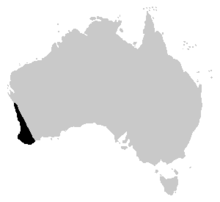 Litoria moorei distrib.PNG