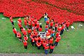 London Poppies At The Tower Of London 20-9-2014 (16738931910).jpg