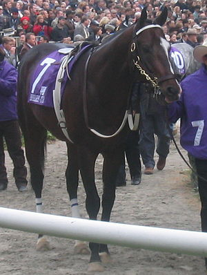 2005 Breeders' Cup - Lost in the Fog before the Sprint