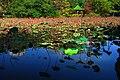Lotus Pond in Taipei Botanical Garden 台北植物園荷花池 - panoramio.jpg