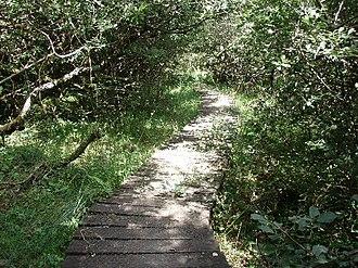 Cornwall Wildlife Trust - Lower Lewdon Nature Reserve
