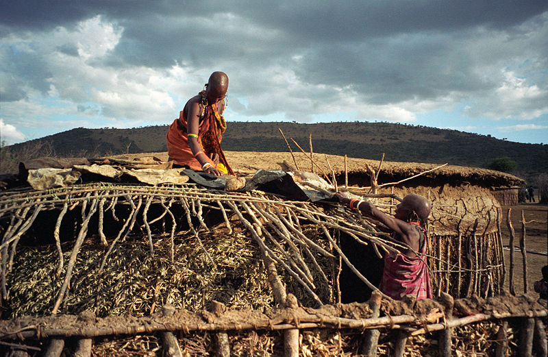 Maasai women repairing a traditional brush and wattle house. Credit: Wikipedia commons