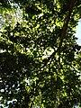 Lush Greens on a sunny day - panoramio.jpg