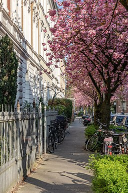 Schulstraße in Münster