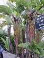 Madeira em Abril de 2011 IMG 1386 (5661159943).jpg