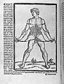 Male figure holding the skin of his trunk open Wellcome L0033531.jpg