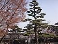 Marunouchi, Matsuyama, Ehime Prefecture 790-0008, Japan - panoramio (66).jpg