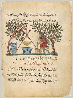 Materia Medica (Arabic translation, leaf)