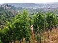 Merlot, Besonders gehaltvolle und komplexe Spitzenweine durch konsequente Ertragsreduzierung - panoramio.jpg