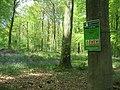 Micheldever Woods - geograph.org.uk - 1672116.jpg