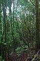Misty Forest 6 (100931835).jpeg