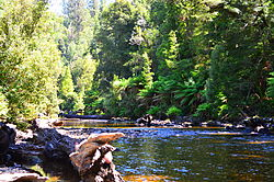 Mixed forest, the Styx River, Tasmania.JPG