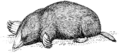 Mole (PSF).png