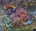 Monaco.Musée océanographique056.jpg