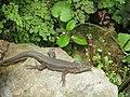Monte Palace Tropical Garden, Funchal - 2012-10-26 (39).jpg
