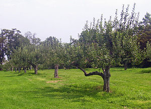 Montgomery Place - Orchards planted by Janet Livingston Montgomery