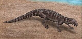 <i>Montsecosuchus</i> genus of reptiles